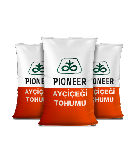 Ayçiçek - Pioneer 140 (İlaçlı)