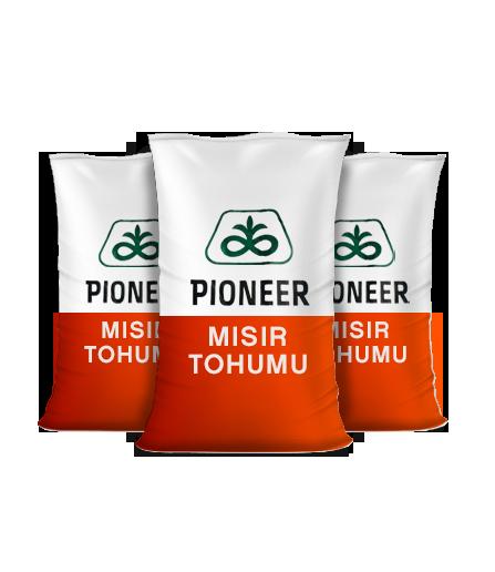 Mısır - PIONEER 31Y43