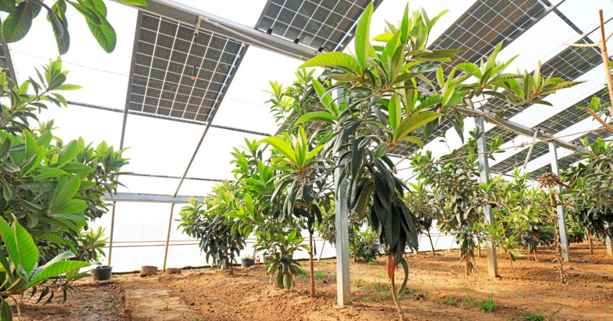Tarımda Güneş Enerjisi Nasıl Kullanılabilir?