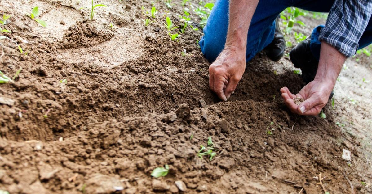 Tohum Islahı Nedir?